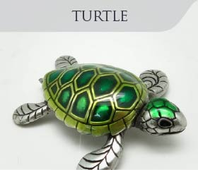 collection-sea-marine-turtle